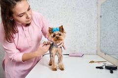 Bitande hår för hund` s arkivfoto