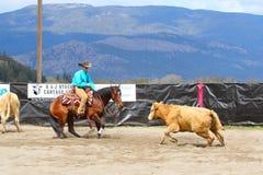 Bitande hästshow Arkivbilder