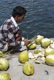 Bitande kokosnötter för en oidentifierad man Royaltyfri Fotografi