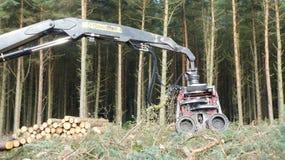 Bitande maskin för träd Royaltyfri Foto