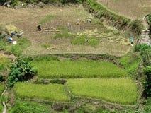 Bitande ris för bonde, Sagada, Luzon, Filippinerna Arkivbild