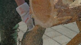 Bitande stam för Chainsaw Man med chainsawen som klipper trädet Chainsaw som klipper nära övre för vedträ Man som klipper en fili lager videofilmer