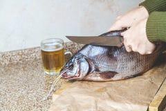 Bitande stor trög fisk Nära råna av öl Fotografering för Bildbyråer