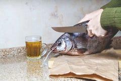 Bitande stor trög fisk Nära råna av öl Arkivbilder