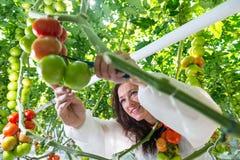 Bitande tomater för ung kvinna royaltyfri foto