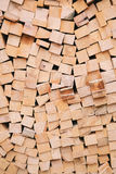 Bitande trä Royaltyfria Bilder