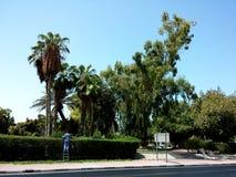 Bitande träd Arkivfoto
