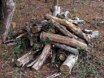 Bitande träd för bruk på den wood ugnen Royaltyfri Fotografi