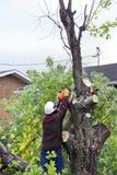 Bitande träd för man Royaltyfri Foto