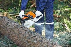 Bitande träd för skogsarbetare i skog Royaltyfri Foto