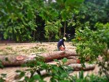 Bitande trädjournaler arkivfoto