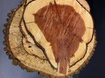 Bitande trädlastbil med cirkelbakgrund Royaltyfria Bilder