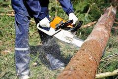 Bitande träd för skogsarbetare i skog Arkivbilder