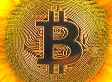 Bitcoin数字式cryptocurrency向日葵 免版税库存照片