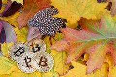 Bitcoin金黄硬币储蓄在秋天 库存照片