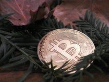 Bitcoin в лесе стоковые фотографии rf
