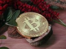 Bitcoin в открытой ореховой скорлупе Стоковое фото RF
