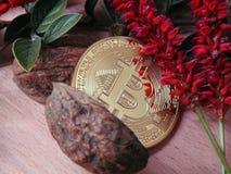 Bitcoin с природой Стоковые Изображения RF