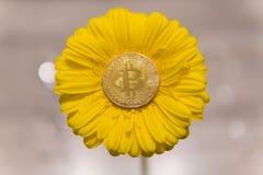 Bitcoin auf gelber Gerberablume Stockbild