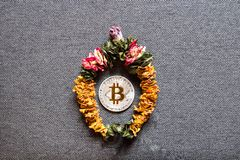 Bitcoin becomes cheaper, The concept of cryptocurrency superiority over the dollar.  royalty free stock photography