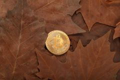Bitcoin. Physical bit coin. Digital currency. Cryptocurrency Stock Photo