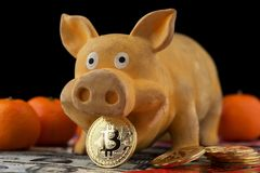 Bitcoin Chinese new year concept. Bitcoin Chinese new year concept Chinese Zodiac sign year of pig Bitcoin RMB Renminbi Pig Chinese New Year Red envelope stock image