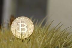 Bitcoin close up coin on a golden Barrel cactus. Bitcoin close up coin on a golden Barrel cactus stock image