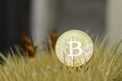 Bitcoin close up coin on a golden Barrel cactus. Bitcoin close up coin on a golden Barrel cactus stock photo