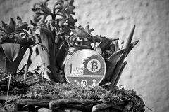 Bitcoin coin flower concept Royalty Free Stock Photography
