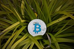 Bitcoin coin outdoor. Digital currency physical metal bitcoin coin. Cryptocurrency outdoor concept Royalty Free Stock Image