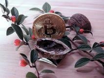 Bitcoin com noz e as bagas abertas Fotos de Stock
