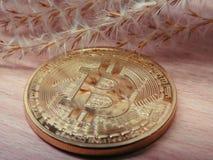 Bitcoin con i semi secchi immagini stock