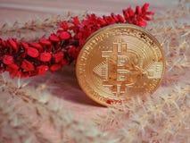 Bitcoin con i semi secchi - fiori rossi immagini stock