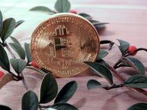 Bitcoin con las bayas fotografía de archivo