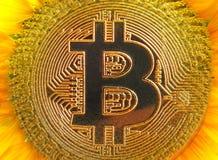 Bitcoin cryptocurrency cyfrowy słonecznik zdjęcia royalty free