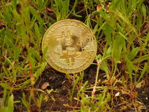 Bitcoin d'or et nature Photographie stock libre de droits