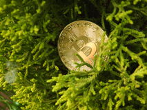 Bitcoin d'or et nature Images stock