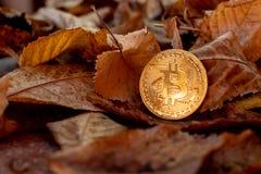 Bitcoin dell'oro con i leafes di autunno nel fondo fotografie stock
