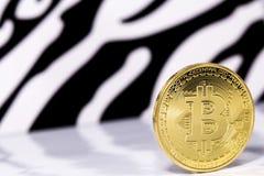 Bitcoin do ouro Fotos de Stock