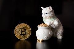 Bitcoin enkelt mynt med en katt Arkivfoto
