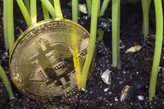 Bitcoin garbage grass 2. Crypto currency. Bitcoin. A crisis. The find. Treasure. The gold coin depreciated and was thrown to the ground like garbage Stock Images