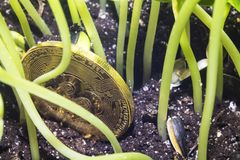 Bitcoin garbage grass 1. Crypto currency. Bitcoin. A crisis. The find. Treasure. The gold coin depreciated and was thrown to the ground like garbage Stock Image