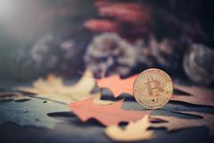 Bitcoin. Gold coins in autumn colored leaves. warm and dark toning. The concept of growth and economy bitcoins Royalty Free Stock Photo
