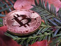 Autumn bitcoin Stock Photography