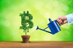 Bitcoin growth concept royalty free stock images