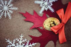 Bitcoin guld- crypto valuta Guld- bitcoiny mot bakgrunden av höstsidor och snöflingor, kall höst Varm mörkerbaksida Royaltyfria Foton