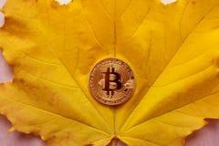 Bitcoin ha aumentado Maduro para el bitcoin de la moneda de la cosecha dentro de la flor La abeja vuela al bitcoin Fotos de archivo