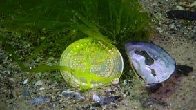 Bitcoin has fallen, Bitcoin is at the bottom, a bearish trend. Coin under water among algae