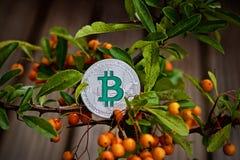 Bitcoin-Münze auf dem grünen Baum lizenzfreie stockbilder