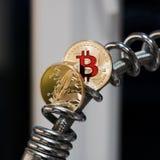 Bitcoin moneta & piórko moneta Zdjęcia Stock